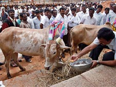 anti-cow slaughter law in Madhya Pradesh