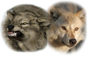 Tow Wolfs
