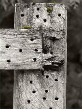 Holes in the fence